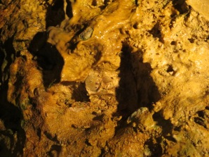 Fossilized shells in the cave walls