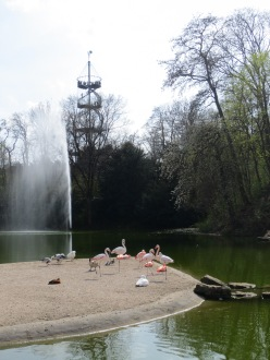 """Are those flamingos?"" ""Why would there be flamingos in a park in the middle of Germany?"" But they are!"