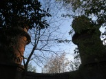 Towers above an artists' studio at the edge of the Volksgarten