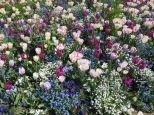 Flowers blooming in the Jubilee Park
