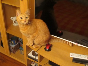 Maccie, the friendliest cat I have ever met