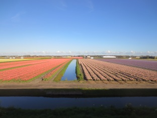 Flowers in the Dutch countryside