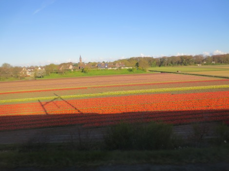 More flowers in the Dutch countryside