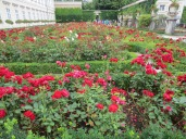 Does the rose garden have enough roses?